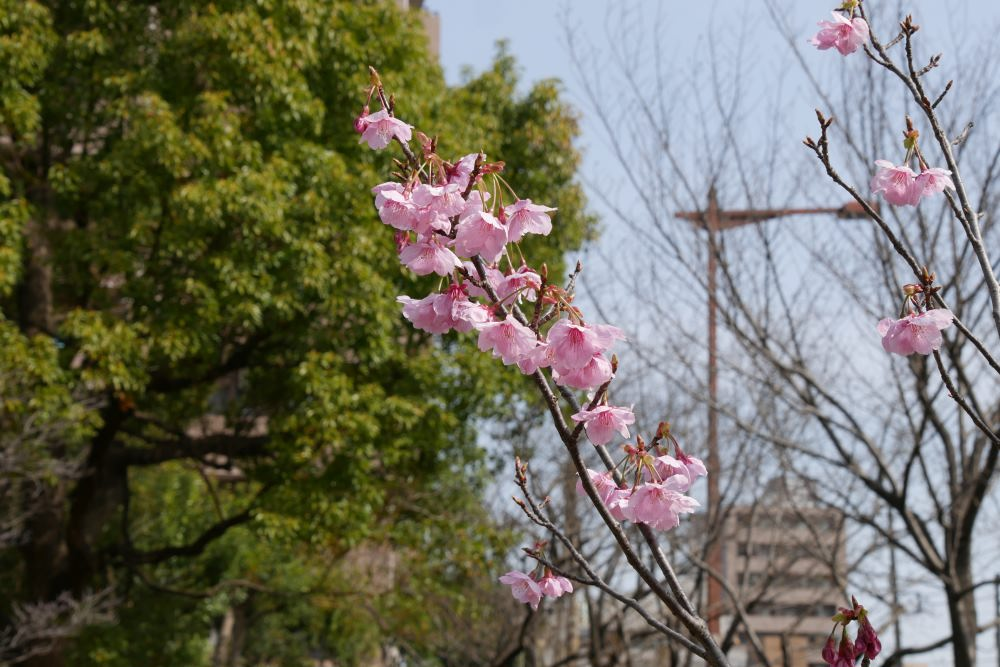f:id:fukagawa1953:20170325120214j:plain