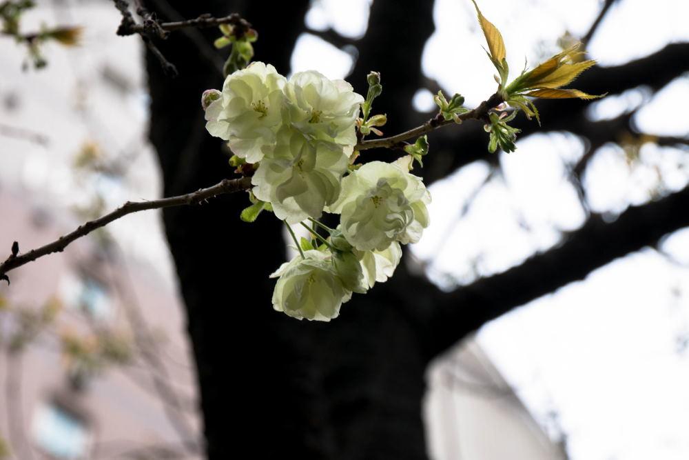 f:id:fukagawa1953:20170408163037j:plain