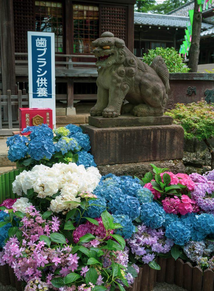 f:id:fukagawa1953:20180618074337j:plain