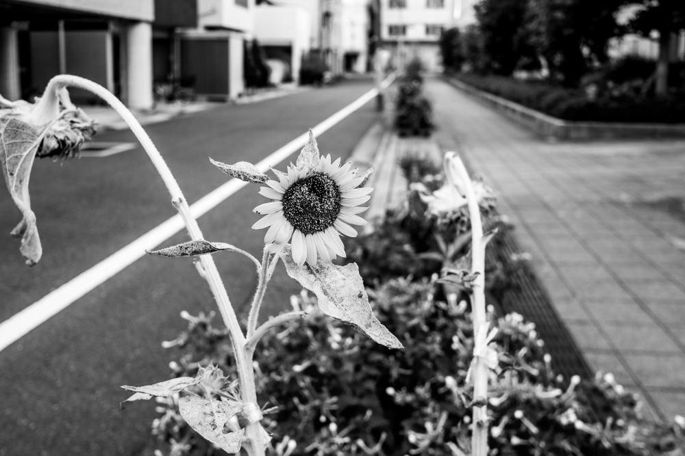 f:id:fukagawa1953:20180822184415j:plain