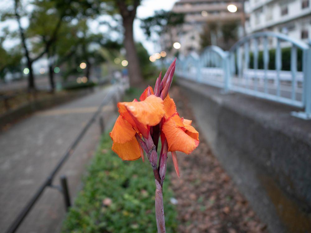 f:id:fukagawa1953:20181111184915j:plain