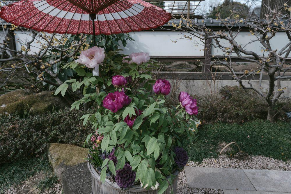 f:id:fukagawa1953:20190214132446j:plain
