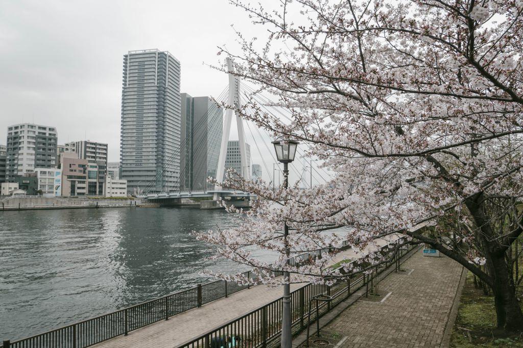 f:id:fukagawa1953:20190330130125j:plain