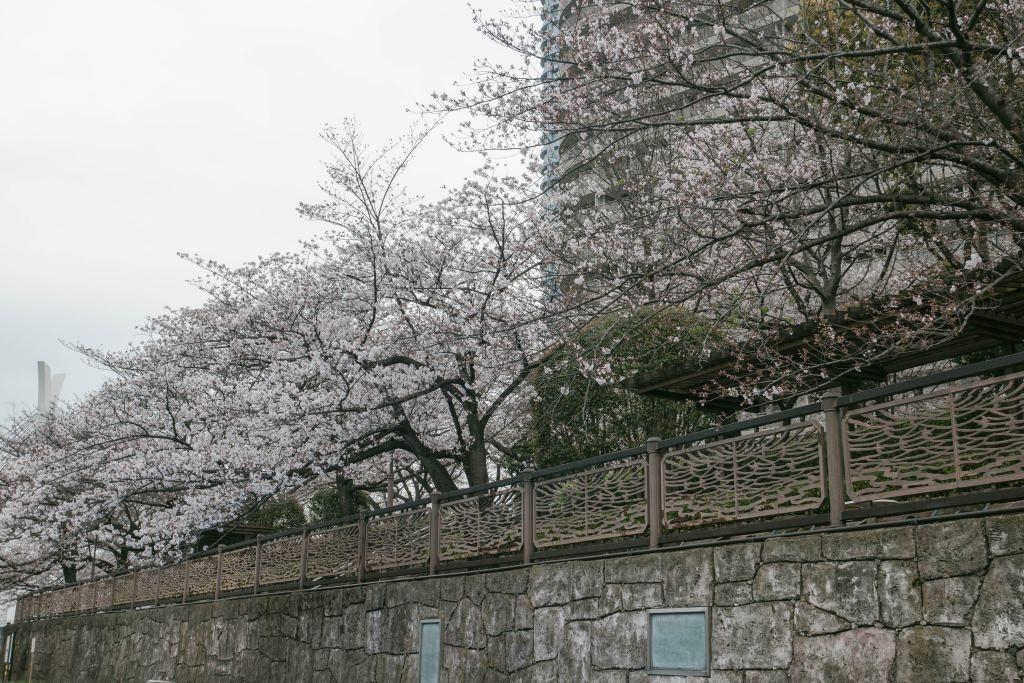 f:id:fukagawa1953:20190330130221j:plain