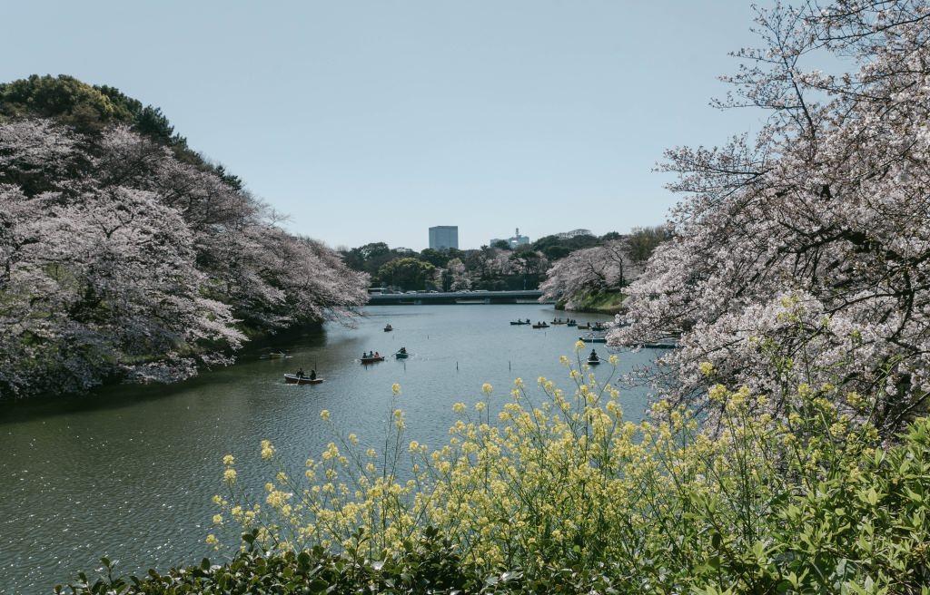 f:id:fukagawa1953:20190402153619j:plain