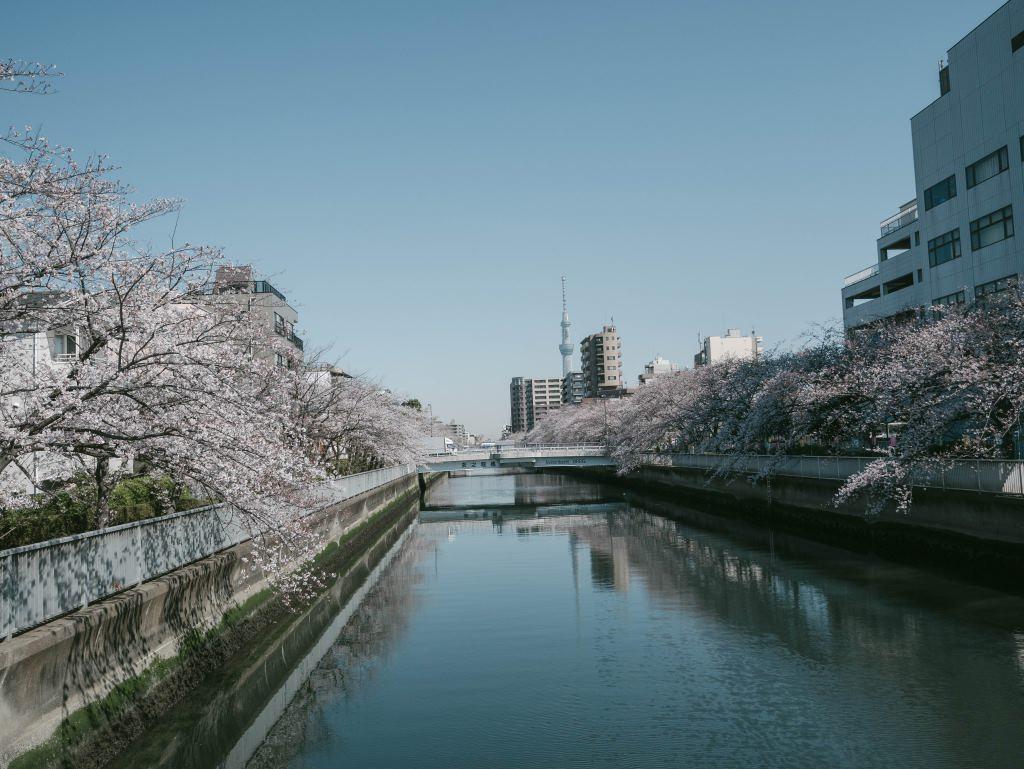 f:id:fukagawa1953:20190404154017j:plain