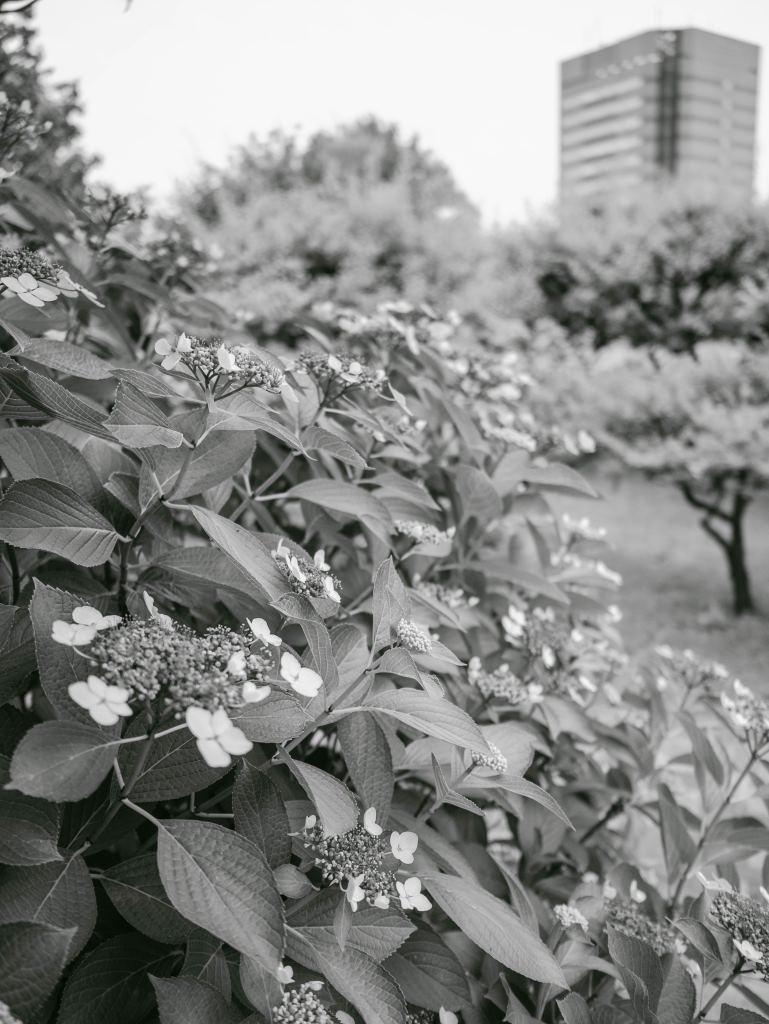 f:id:fukagawa1953:20190606073723j:plain