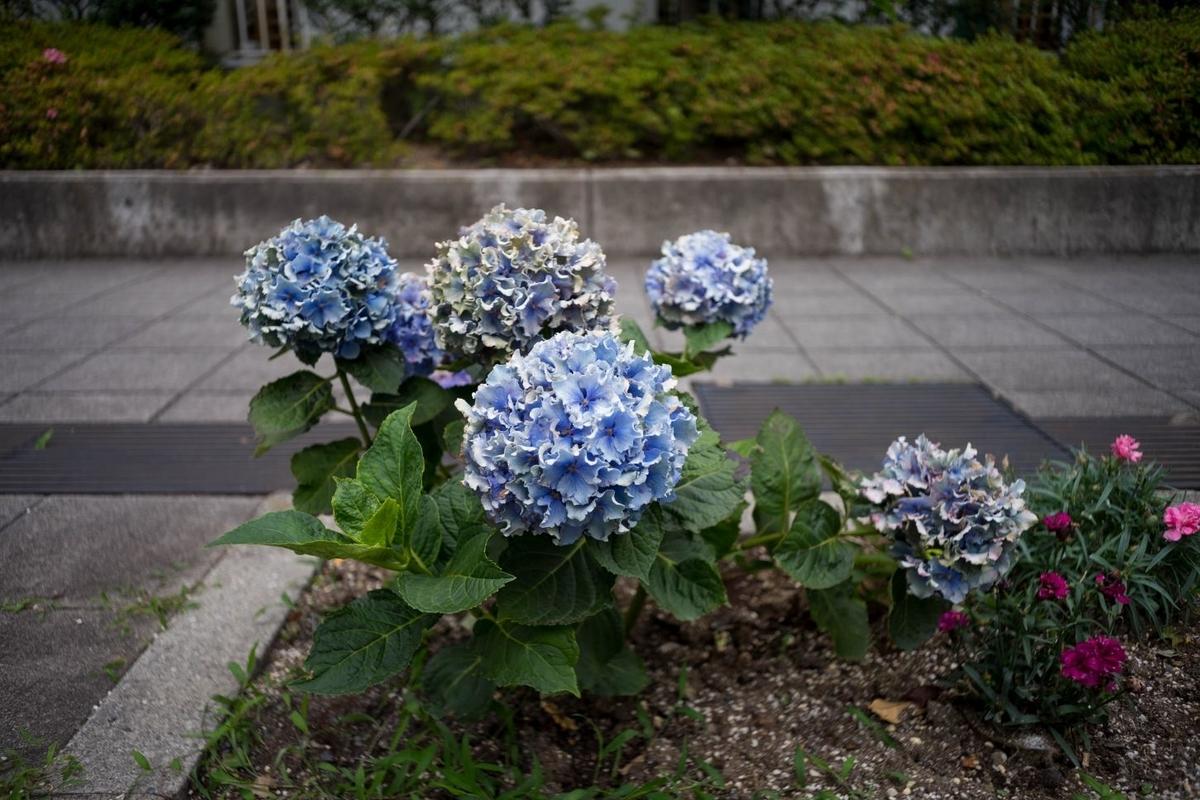 f:id:fukagawa1953:20190619072035j:plain