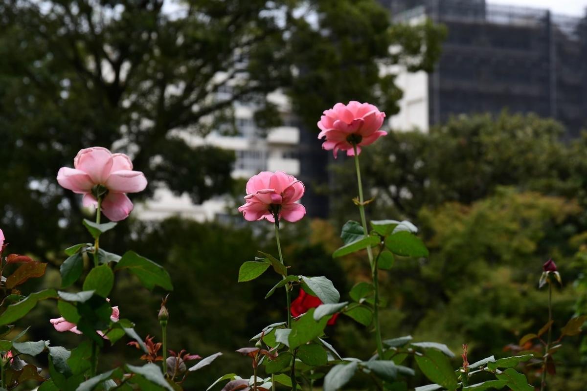 f:id:fukagawa1953:20191025133355j:plain