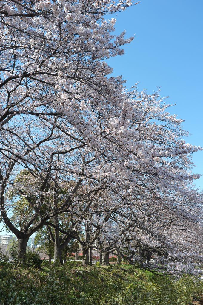 f:id:fukagawa1953:20200324154115j:plain