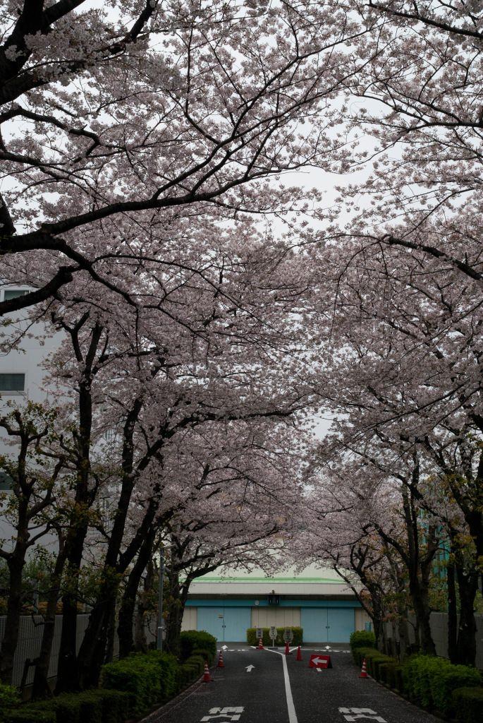 f:id:fukagawa1953:20200401132057j:plain