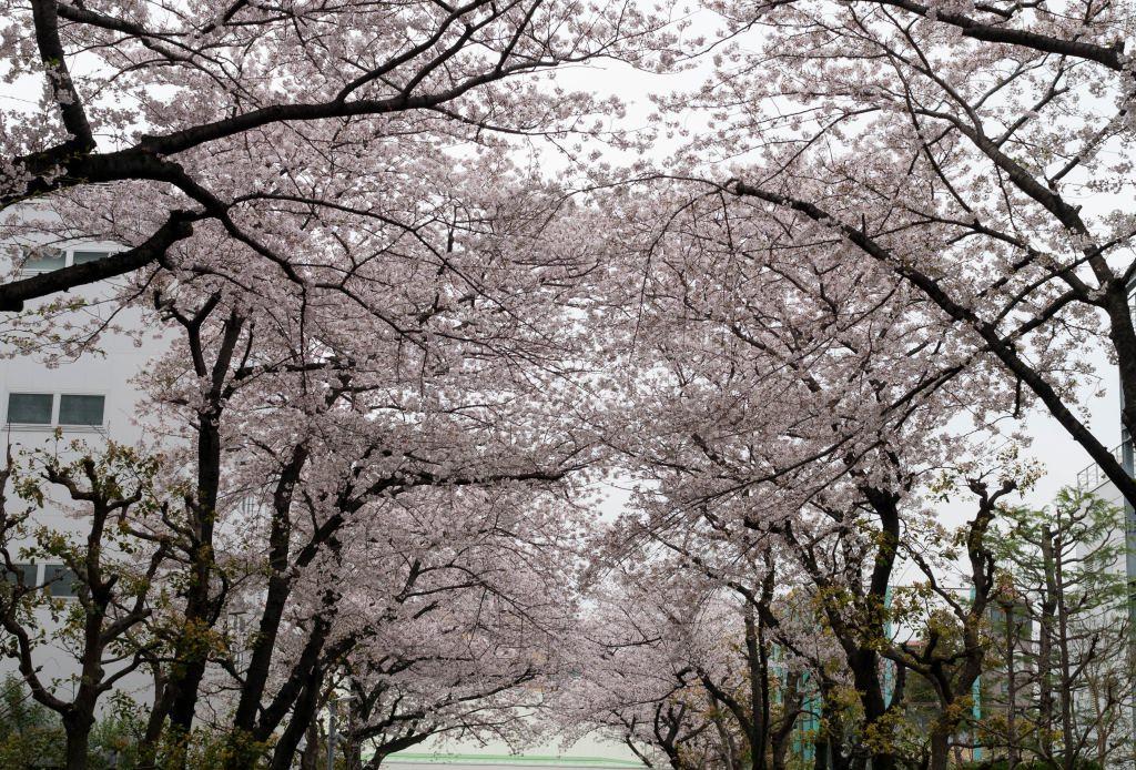 f:id:fukagawa1953:20200401132102j:plain