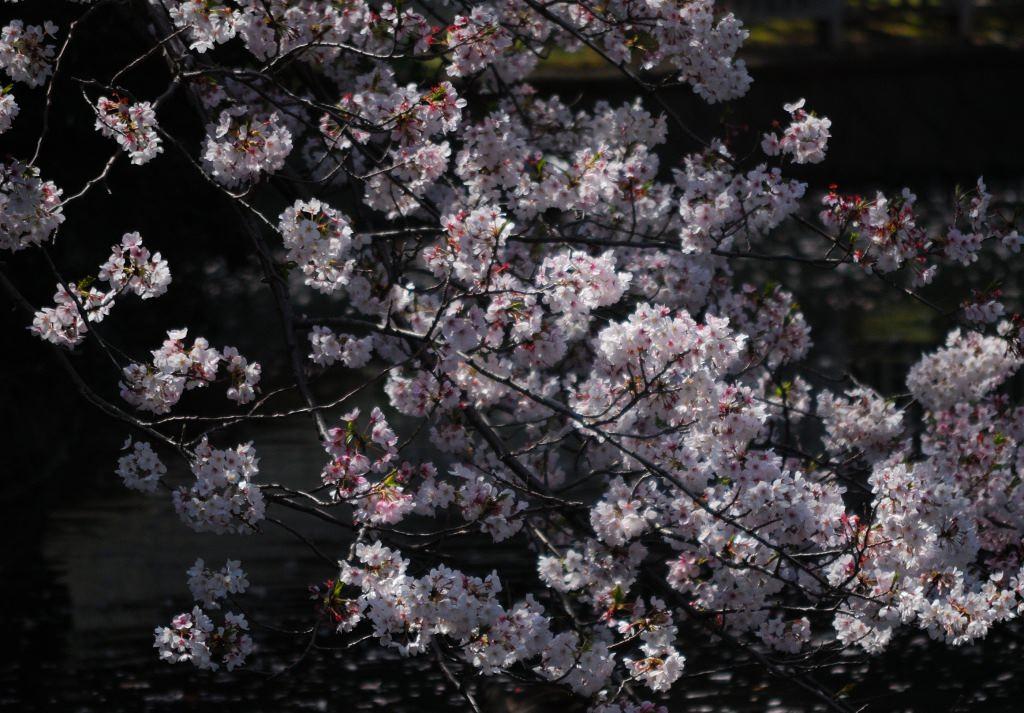 f:id:fukagawa1953:20200404131127j:plain