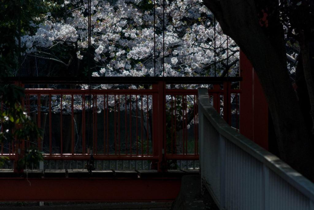 f:id:fukagawa1953:20200407063035j:plain
