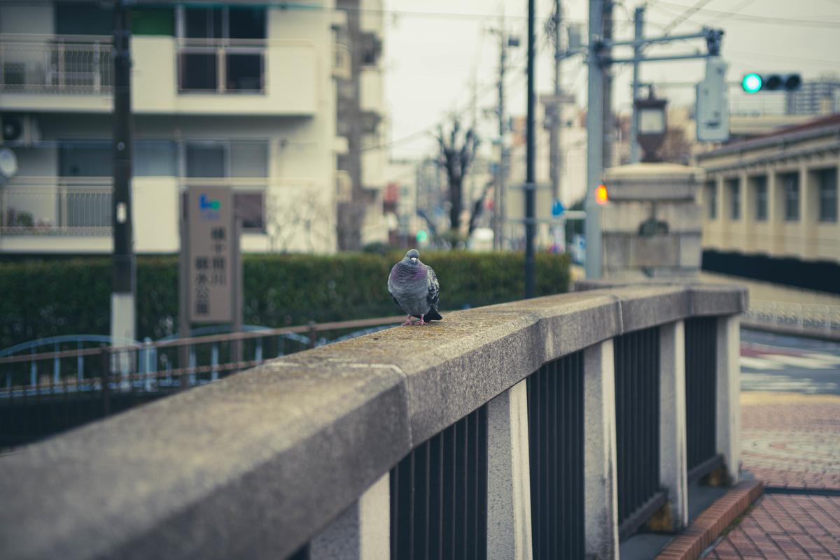 f:id:fukagawa1953:20210308172130j:plain