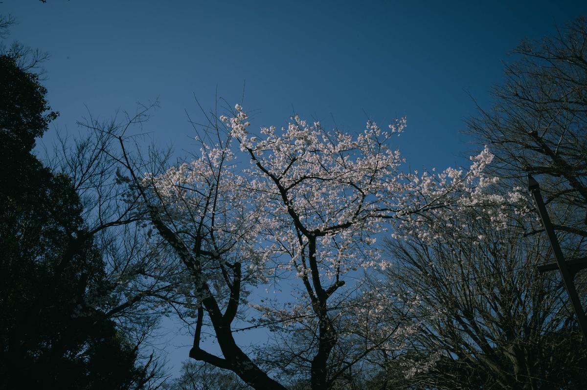 f:id:fukagawa1953:20210315114752j:plain