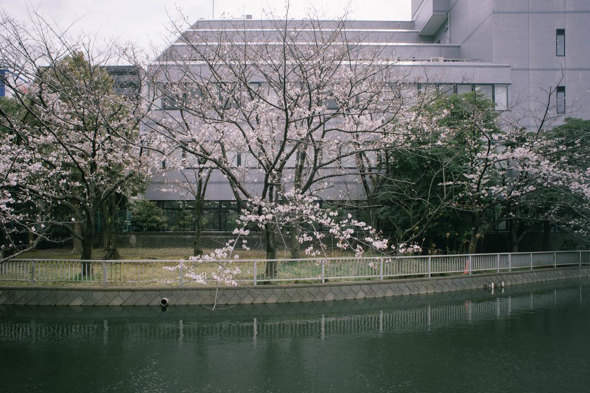 f:id:fukagawa1953:20210322171308j:plain