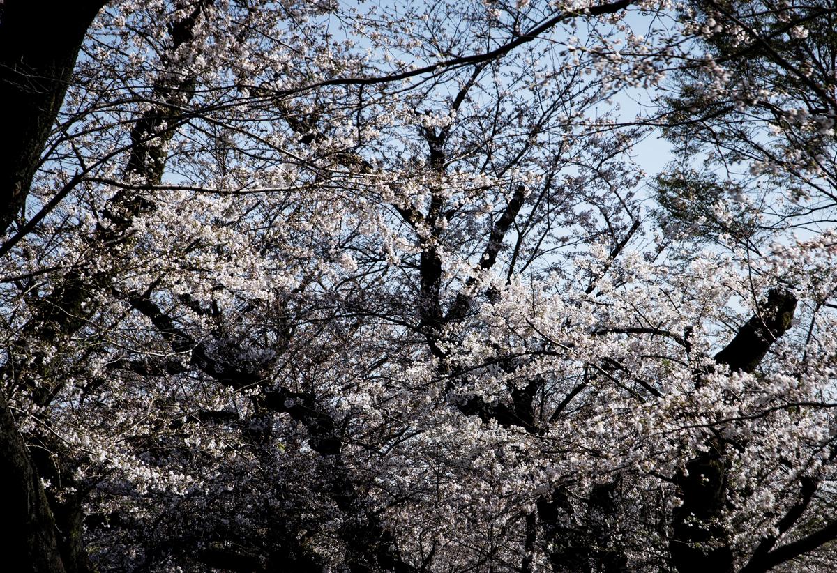 f:id:fukagawa1953:20210324061636j:plain