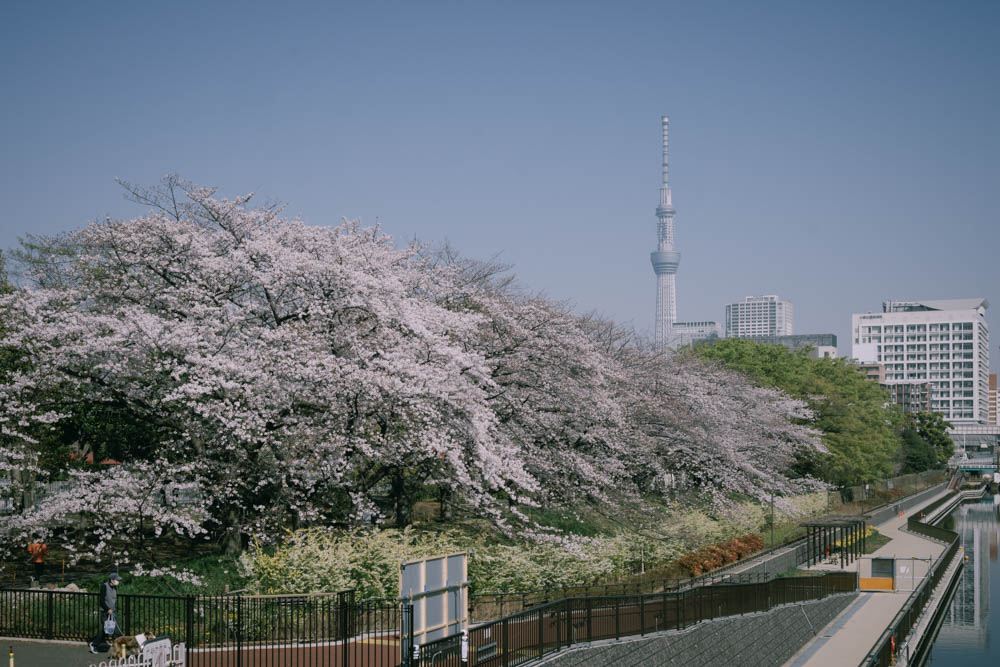 f:id:fukagawa1953:20210324100007j:plain