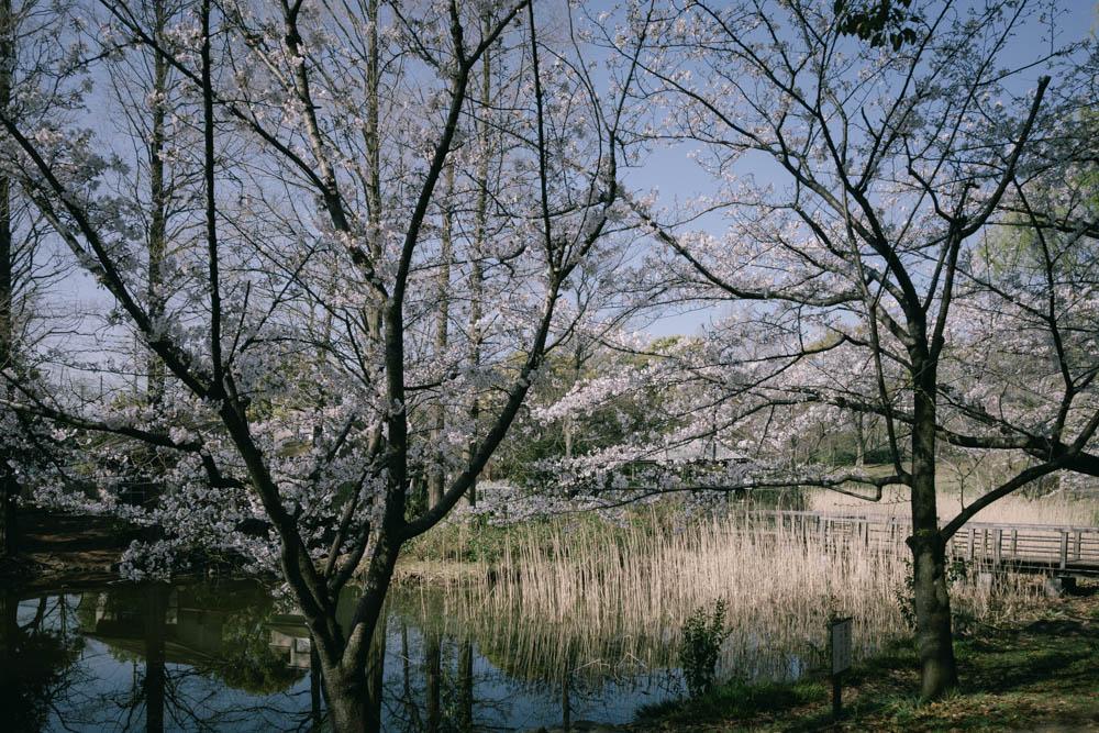 f:id:fukagawa1953:20210325062413j:plain