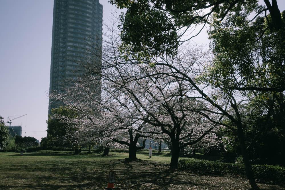 f:id:fukagawa1953:20210325062423j:plain