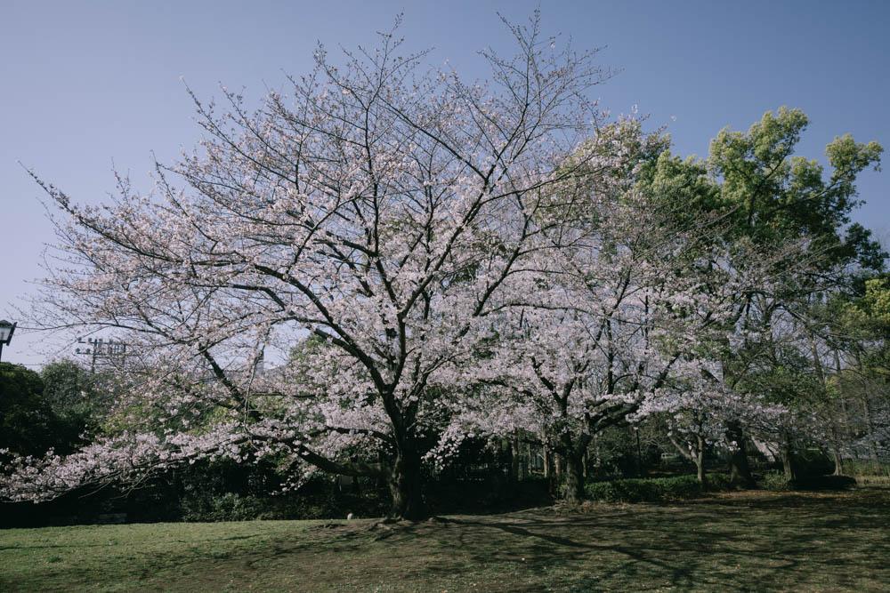 f:id:fukagawa1953:20210325062438j:plain