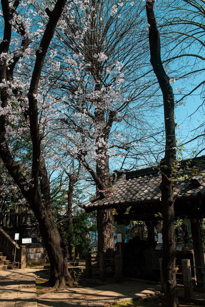 f:id:fukagawa1953:20210327115636j:plain