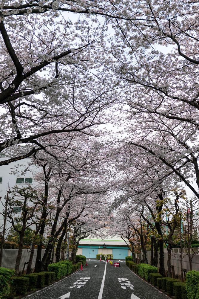 f:id:fukagawa1953:20210327182148j:plain
