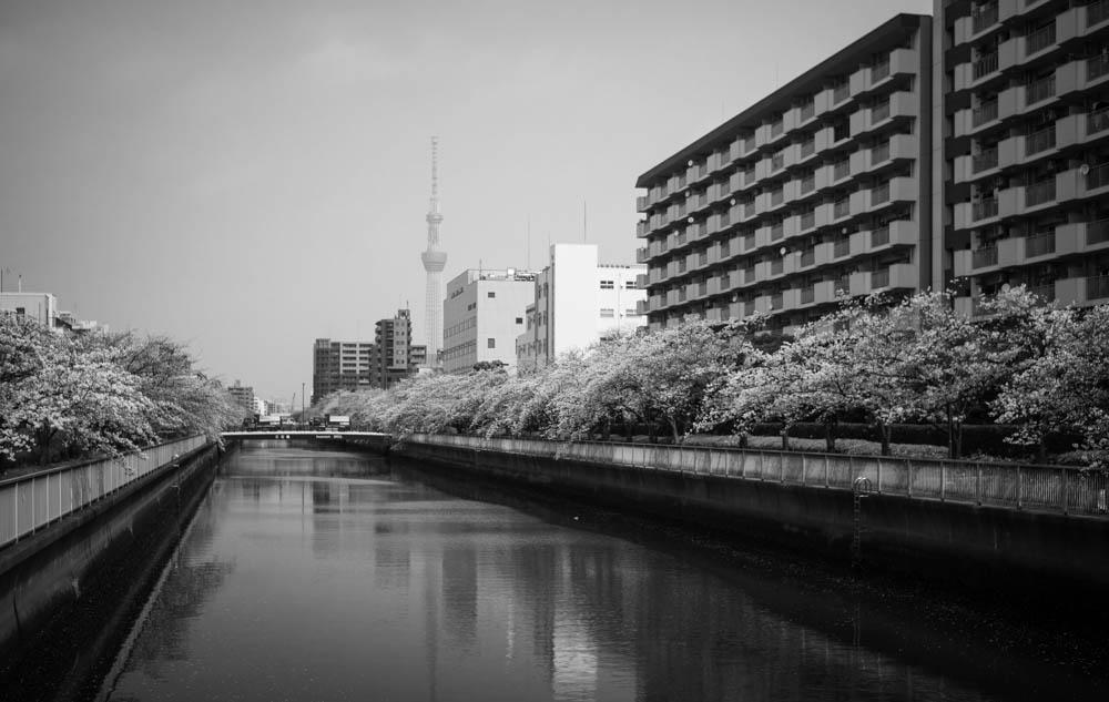 f:id:fukagawa1953:20210330105954j:plain
