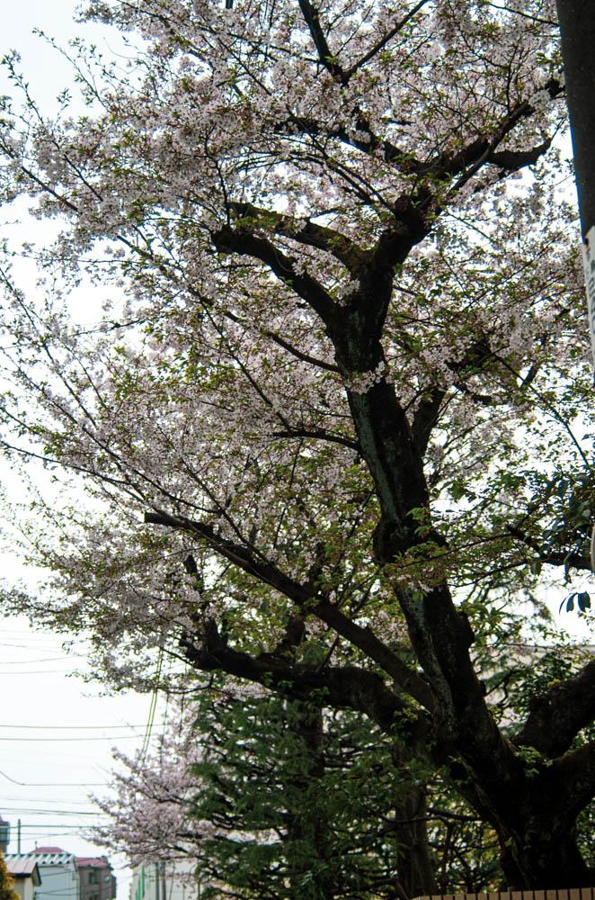 f:id:fukagawa1953:20210330203502j:plain