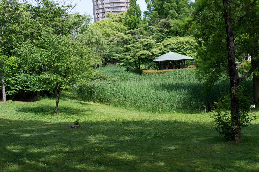 f:id:fukagawa1953:20210514203529j:plain