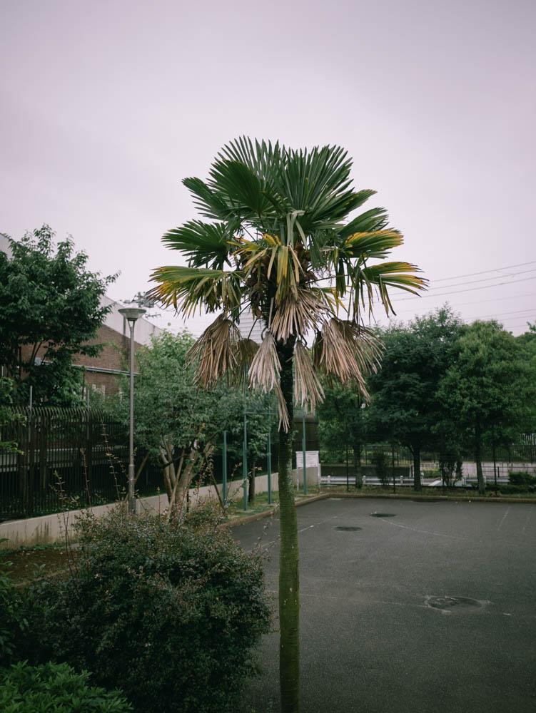 f:id:fukagawa1953:20210527113607j:plain