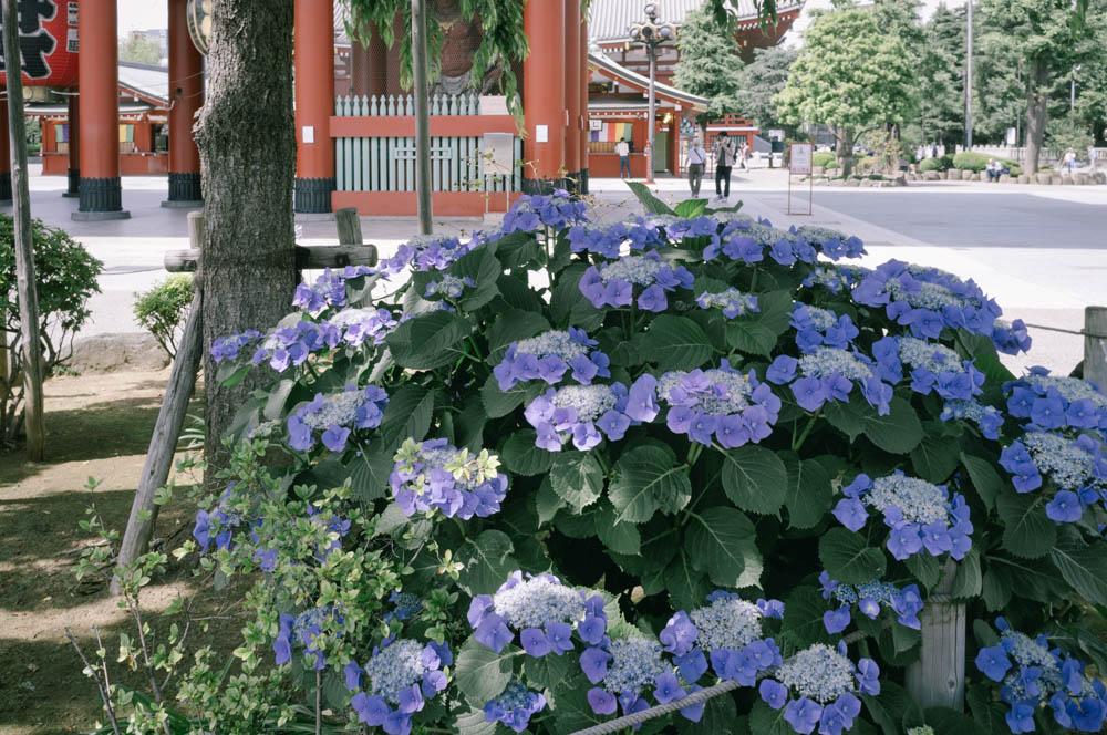f:id:fukagawa1953:20210603152515j:plain