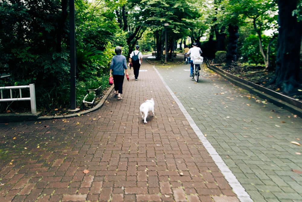 f:id:fukagawa1953:20210808171114j:plain