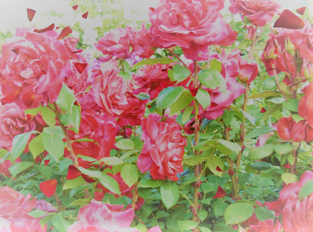 f:id:fukagawa_natsumi:20200218160754p:plain