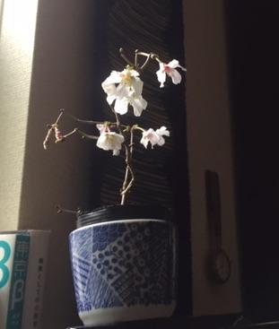 f:id:fukahara_itami:20170327093900j:plain
