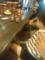 夫懇意のカフェで、電車ヲタクの友人といっぷく。