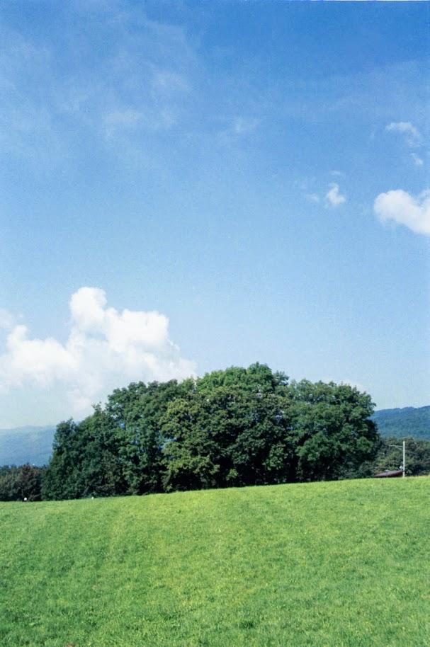 f:id:fukarinka:20200405113853j:plain