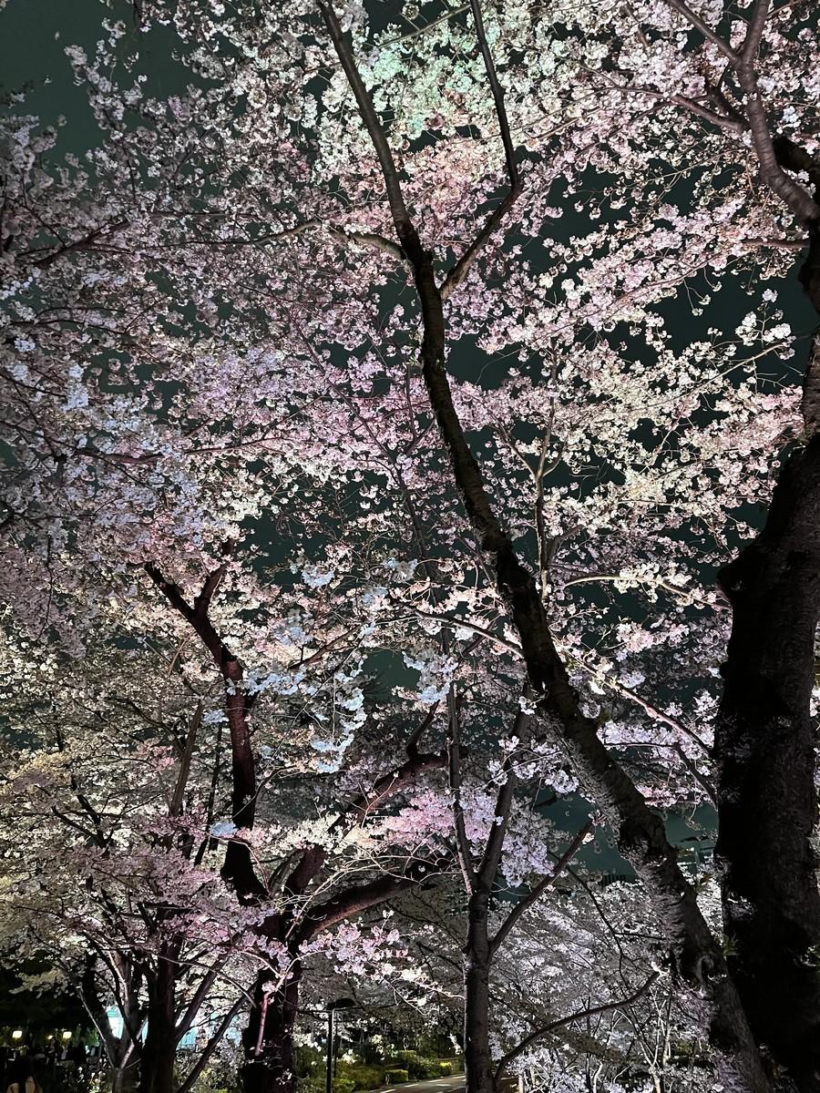 f:id:fukasaku:20210325185136j:plain