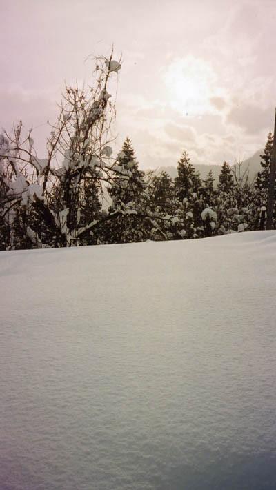 CONTAX Tix作例(猿羽根山の雪)