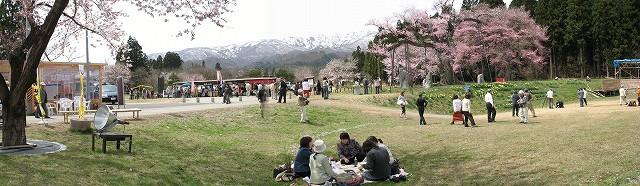 釜の越桜と花見客