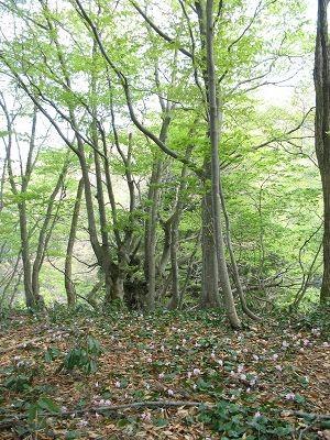 土湯山の森