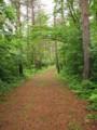 甘酒地蔵尊付近の松並木