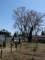 間もなく開花の草岡の大明神桜
