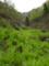 新庄峠・緑の渓