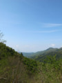 百子沢林道で空を仰ぐ