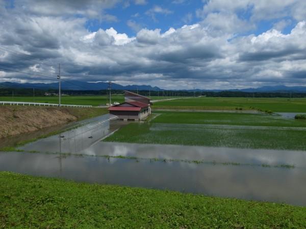 野尻川合流点付近の水田