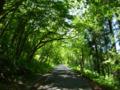 二口林道のブナ林