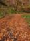 落ち葉の絨毯に覆われる国道458号線