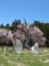 枯死した釜の越桜
